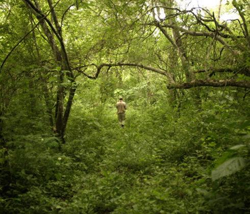 Habrá bosque urbano en Málaga