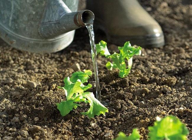 riego de plantas en la huerta