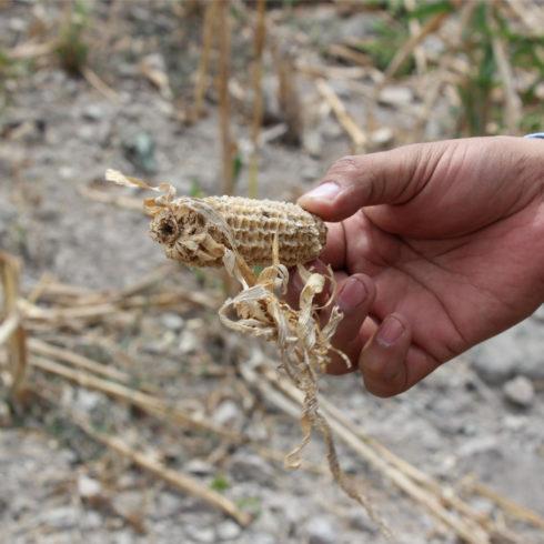 sequía agrícola