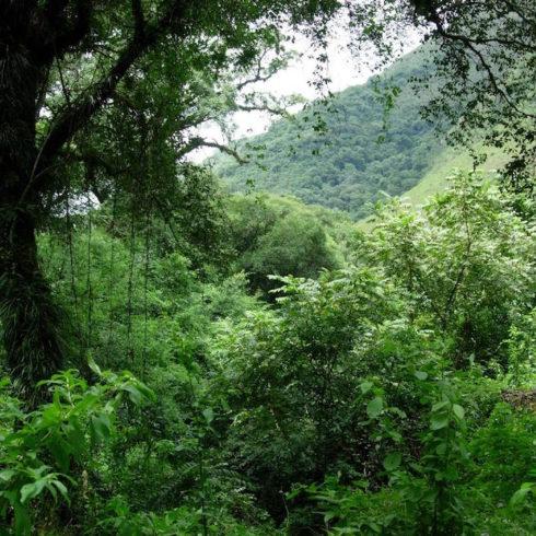 Bosques nativos: fallo favorable para los de Jujuy