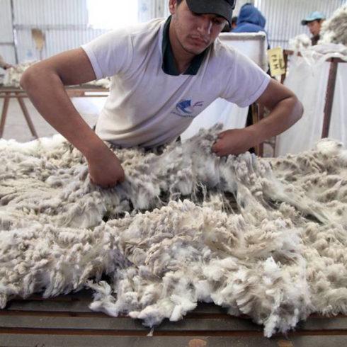 Programa Prolana: una industria textil