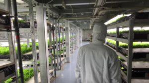Agricultura urbana en Spread -Kyoto-