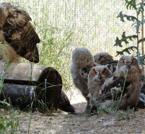 animales huérfanos rescatados por Grefa