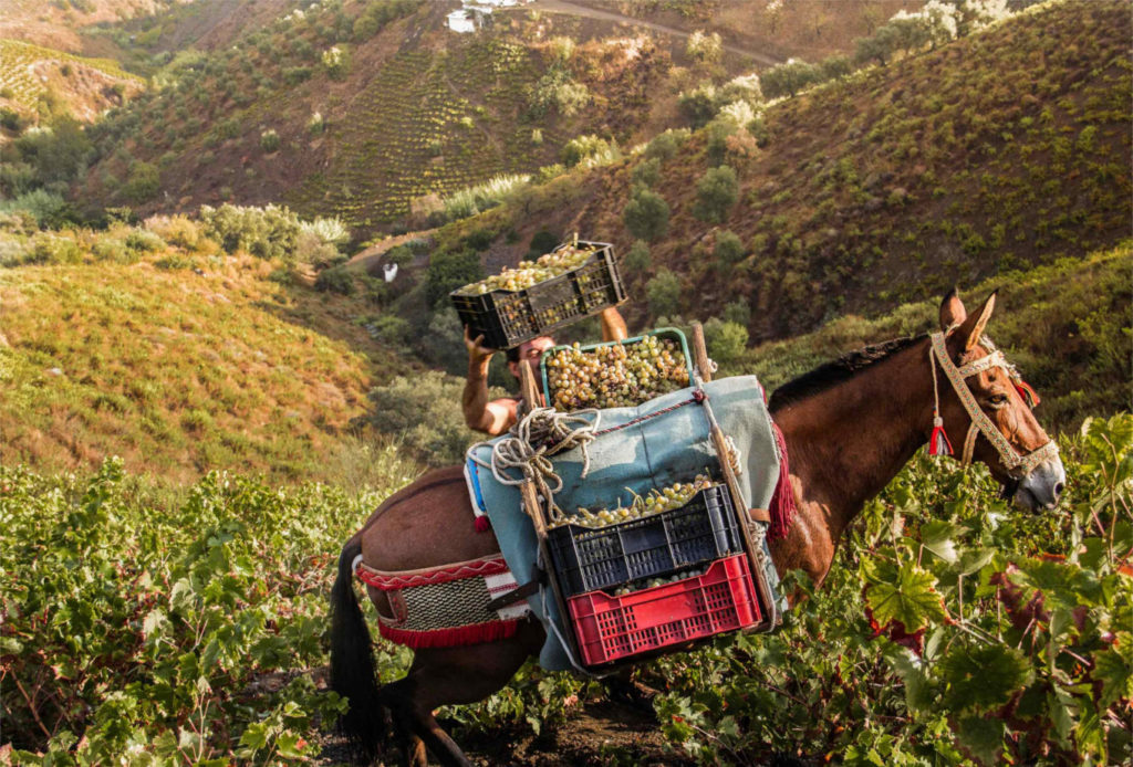 Patrimonio Agrícola Mundial