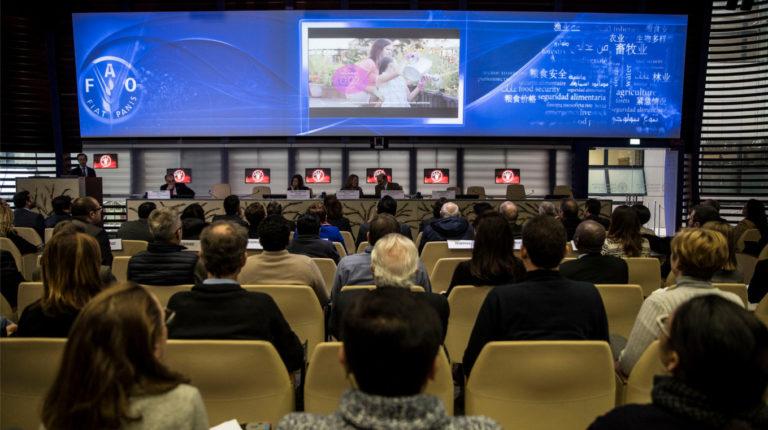 1060 millones de dólares pide la FAO