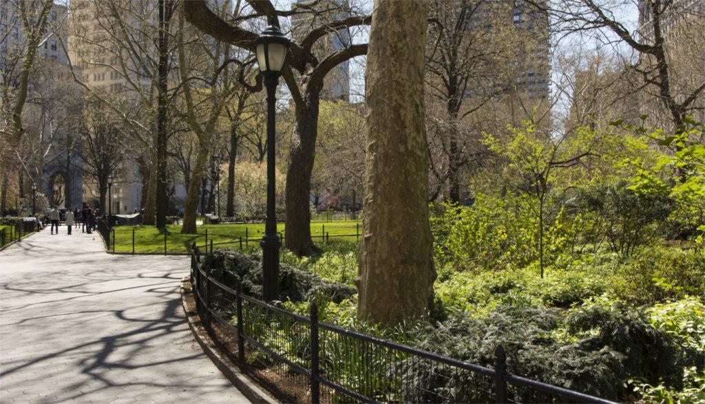 Para enfrentar el cambio climático, los bosques urbanos