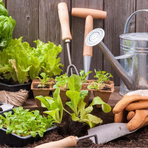 La agricultura social, a través de los huertos educativos del Triodos Bank