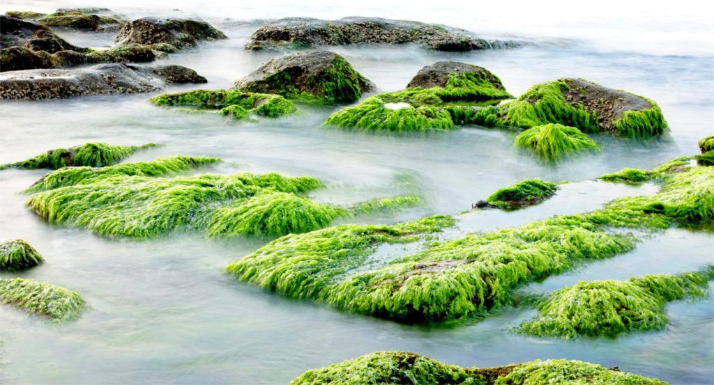 Biotecnología basada en algas y bacterias