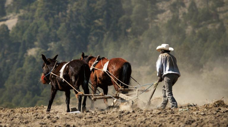 La FAO elige diez proyectos sobre desarrollo rural sostenible