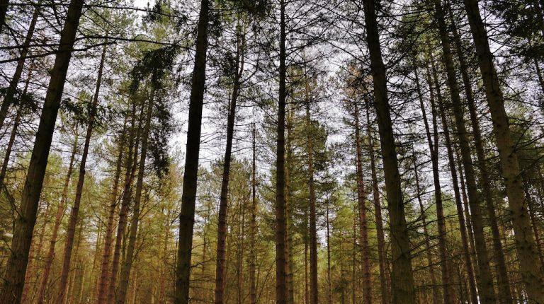 Biomasa forestal, o como reinventar un negocio
