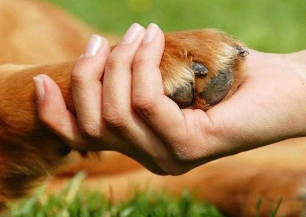 Animales no humanos, la inclusión pendiente