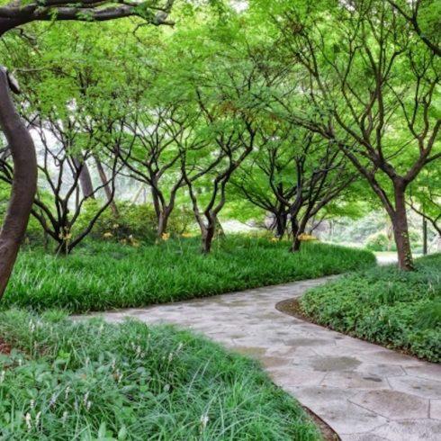 Habrá bosque urbano en Málaga también