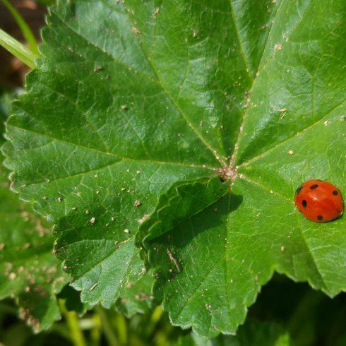 La asociación Ecologistas en Acción (EA) lanzá una campaña para concientizar sobre el valor de la biodiversidad