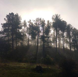 En el Día Internacional de los Bosques y en el Día Mundial del Agua, guías para cuidarlos y protegerlos