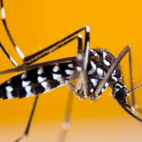 Detección de brotes de dengue en tiempo real gracias a la tecnología GIS