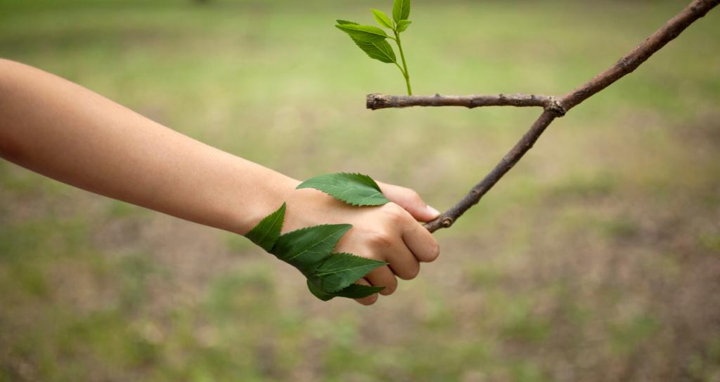 Declaración de principios para el renacimiento sostenible desde América Latina