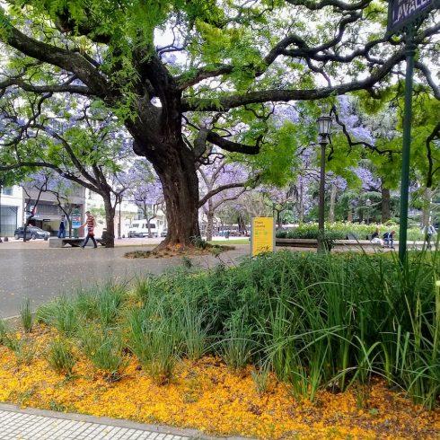 En el Día del Árbol y la Semana del Árbol, una campaña para plantar un millón de árboles nativos en todo el país