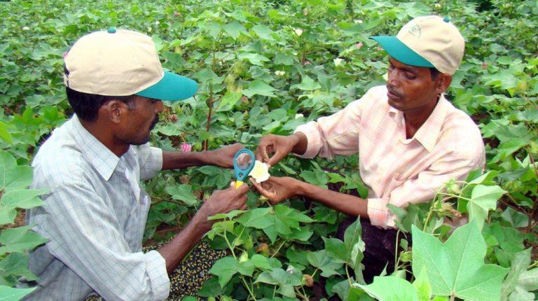 Año Internacional de la Sanidad Vegetal 2020