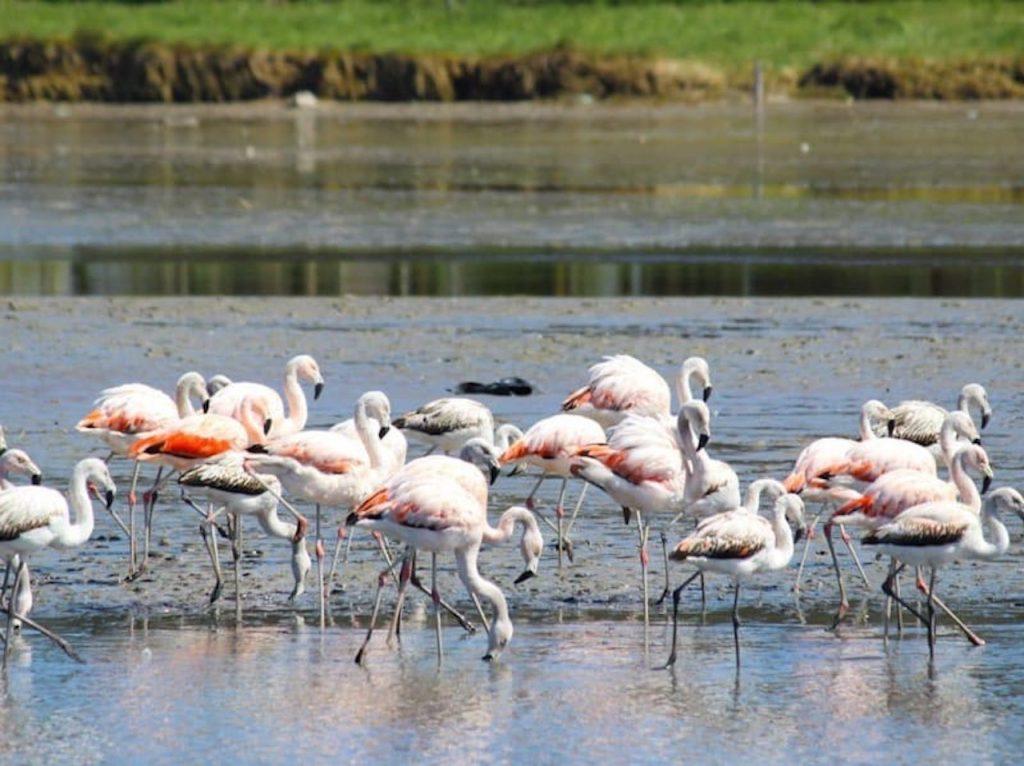 Parque Atlántico Mar Chiquito, una joya de la biodiversidad ideal para turismo de naturaleza