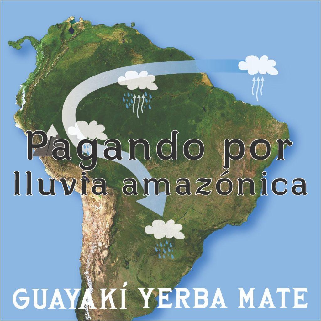 El acuerdo Guayakí-Gaia, del que Pedro Tarak ha sido intermediaro, refleja la interdependencia entre ecosistemas exitosa