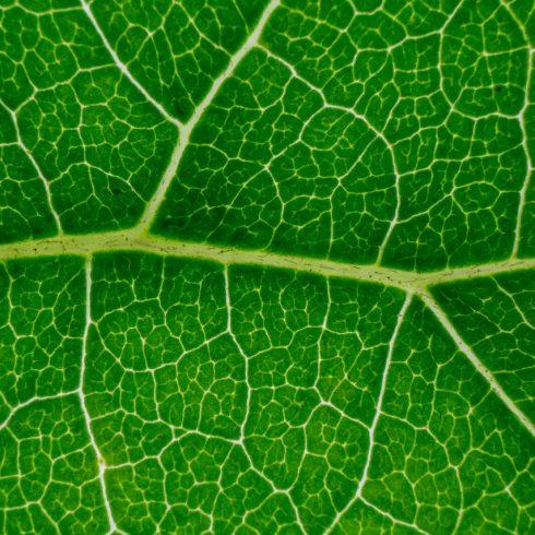 Green Beauty es una ambiciosa iniciativa empresaria que busca reducir el impacto ambiental global