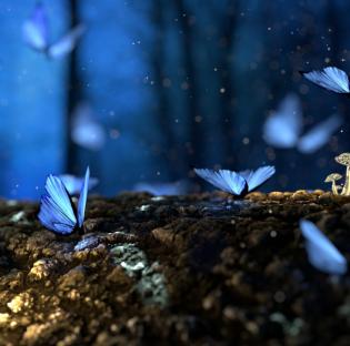 Sin insectos no hay vida, una nueva campaña para demostrar su importancia