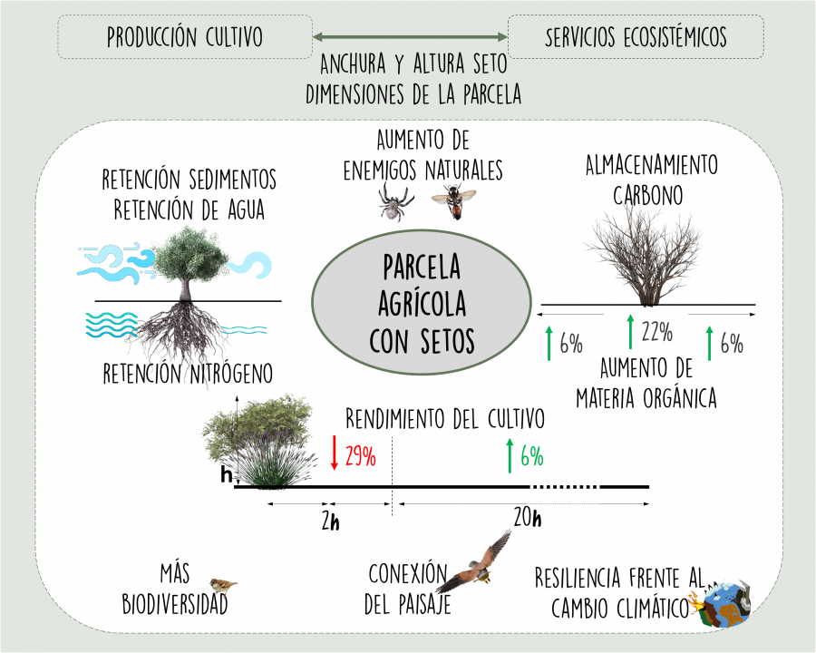 Una herramienta online facilita la elección de los árboles y arbustos más adecuados para crear setos
