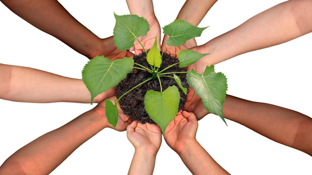 Cómo son los seis principios de la colaboración extrema