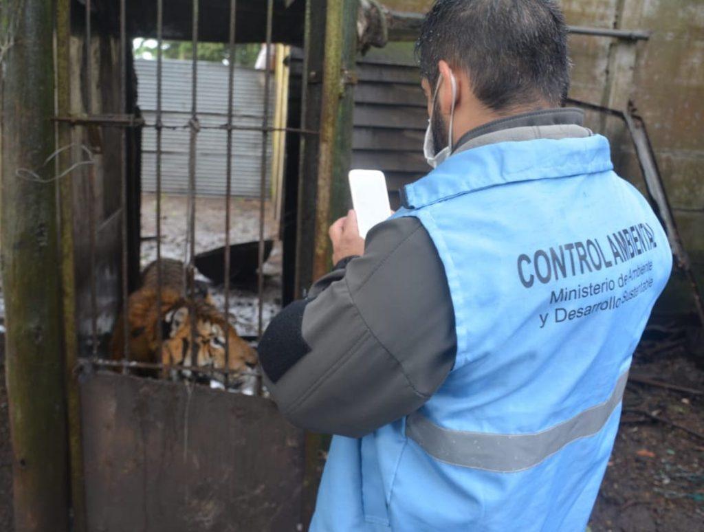 El procedimiento contra el tráfico de animales  en Balcarce consistió en un allanamiento