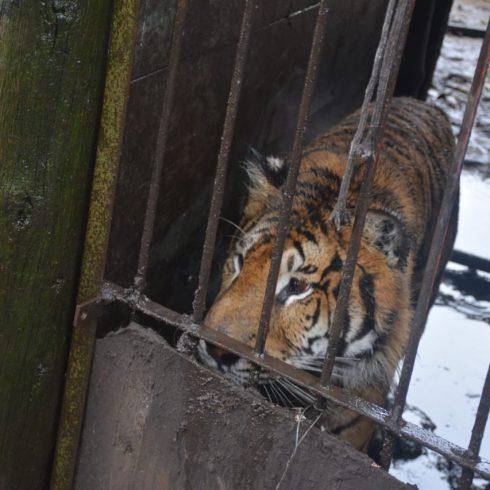 Allanamiento en Balcarce por tráfico de animales, que realizó el Ministerio de ambiente nacional