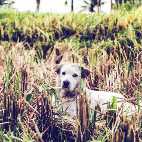Perros y gatos abandonados, en tránsito o en adopción, gracias a los voluntarios de Metlife