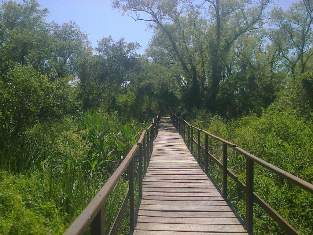 Protección de los humedales en el Día Mundial de los Humedales