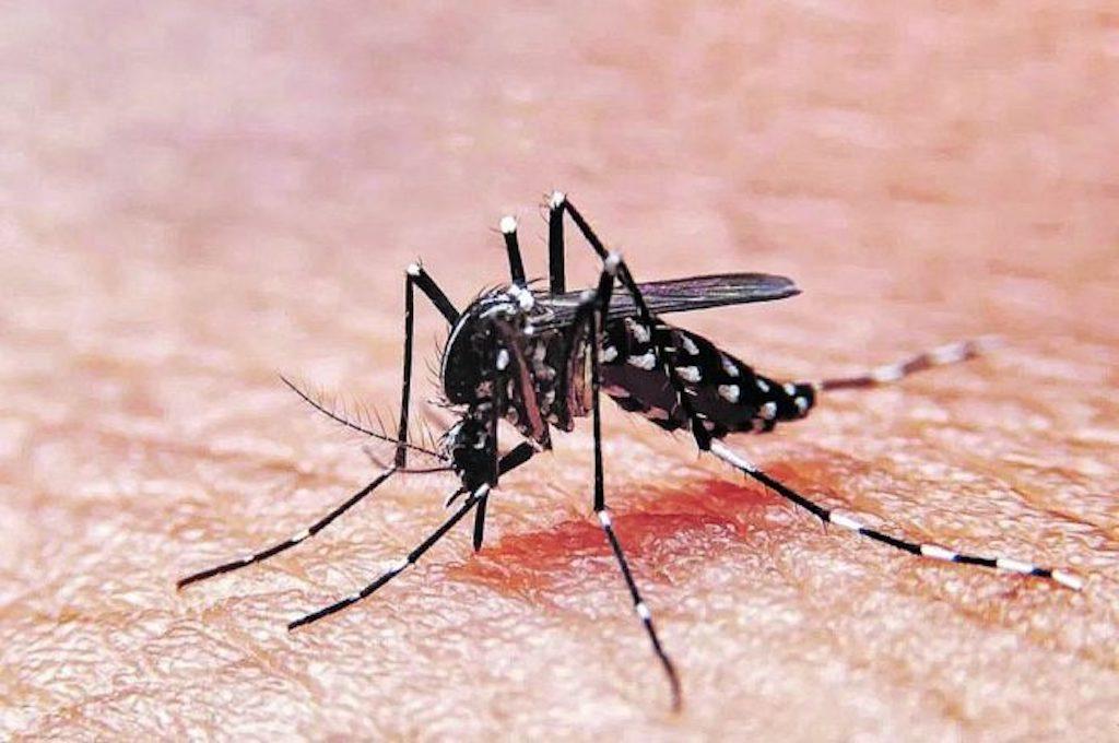 Dengue y Covid19 pueden prevenirse al mismo tiempo, dicen los expertos