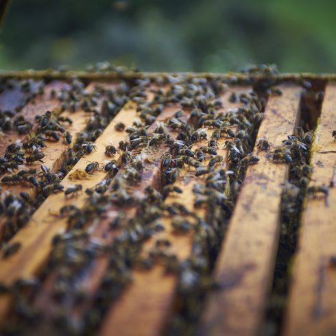 La miel producida por la apicultura biodinámica es una manera sensible y atenta de seguir a la naturaleza