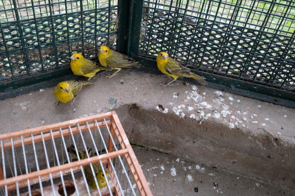 Más de 400 aves fueron rescatadas del tráfico ilegal de fauna, en Pilar y en Capital