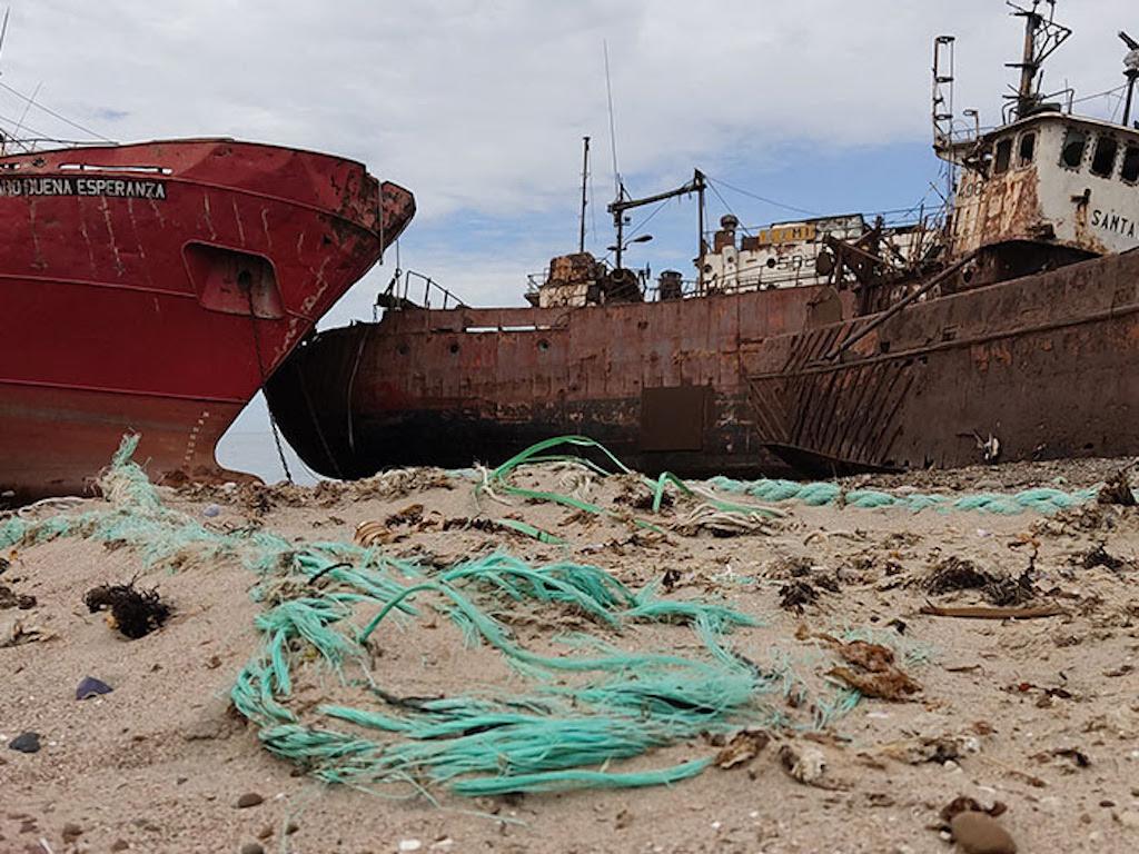 """La campaña """"Guardianas de los océanos"""" buscar proteger a la ballena franca austral en el Mar Argentino"""