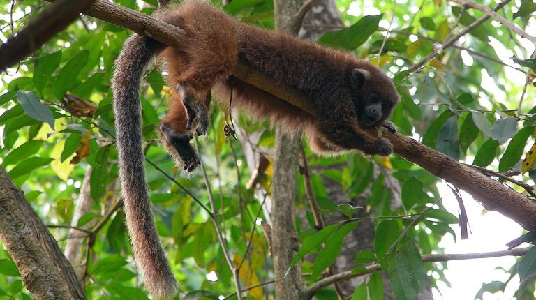 Wildlife Conservation Society y Mercado Libre firmaron un convenio para trabajar conjuntamente en la protección de las especies amenazadas en América Latina