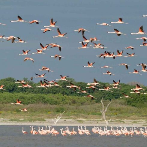 Ansenuza será un nuevo Parque Nacional en la provincia de Córdoba