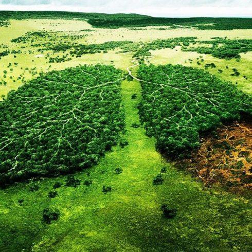 Rodrigo Martínez Goyena y su columna de Opinión sobre la moral ambiental