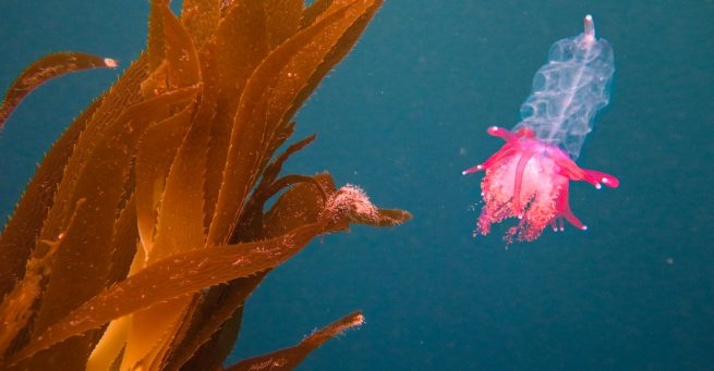 Al rescate de los océanos