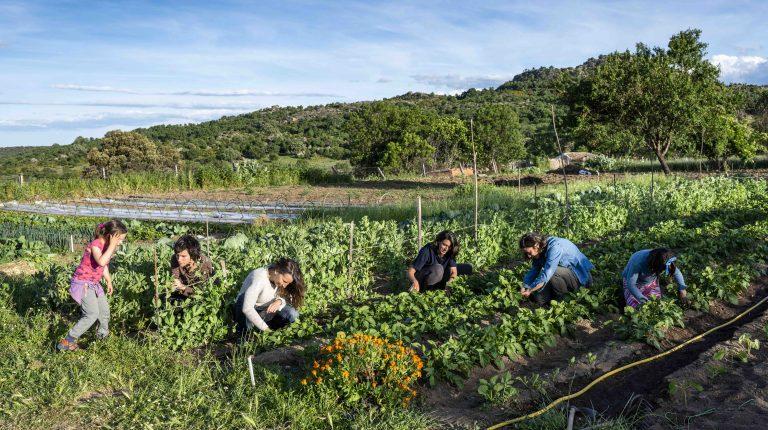 Microfinanciación particpativa y proyectos agroalimentarios de proximidad en la convocatoria de Imidra y Fundación Triodos