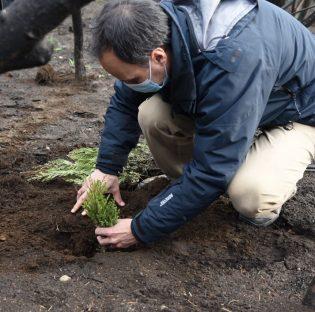 Comenzó el Programa de Restauración de las áreas degradadas del Bosque nativo en El Hoyo, Chubut
