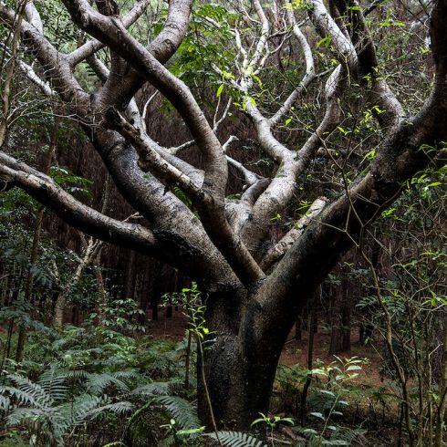 La empresa GMF de proyectos forestales para la mitigación del cambio climático recertificó como Empresa B
